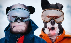 Cagoule de ski animals