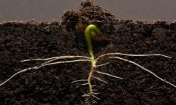 Time-lapse sur la croissance de plantes