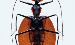 Mi-insecte mi-femme de Laurent Seroussi